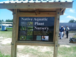 Native Aquatic Plant Habitat